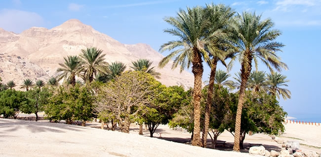 Travel to Ein Gedi while on your Holy Land Tour to Israel